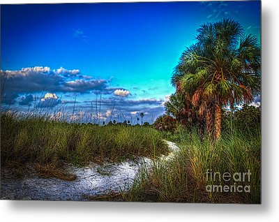 Palm Trail Metal Print by Marvin Spates