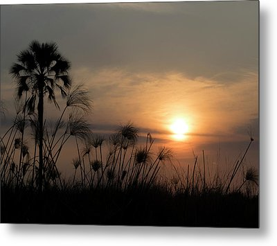 Palm Tree And Papyrus Plants At Dusk Metal Print