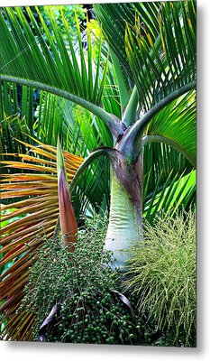Palm Tree Inflorescence In The Rainforest  Metal Print by Karon Melillo DeVega