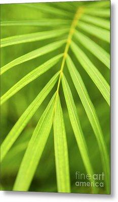 Palm Tree Leaf Metal Print by Elena Elisseeva