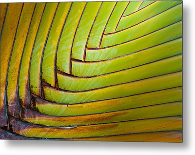 Palm Tree Leafs Metal Print