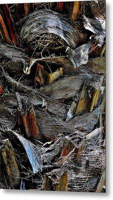 Palm Tree Trunk - Darwin - Australia Metal Print
