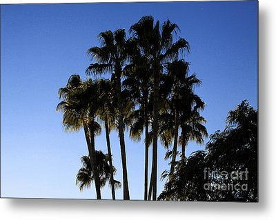Metal Print featuring the photograph Palm Trees by Chris Thomas