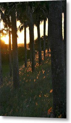 Palm Trees In Silhouette Metal Print