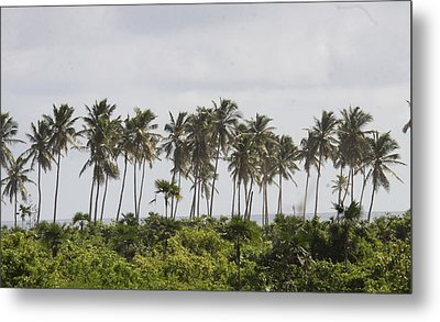 Palm Trees Metal Print by Mustafa Abdullah