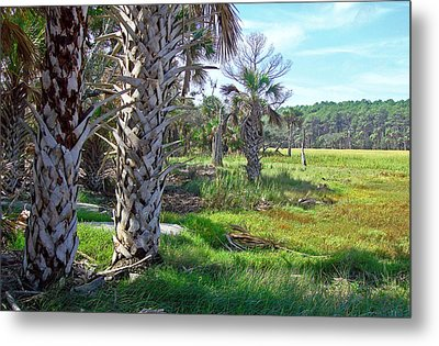 Metal Print featuring the photograph Palm Trees On Hunting Island by Ellen Tully