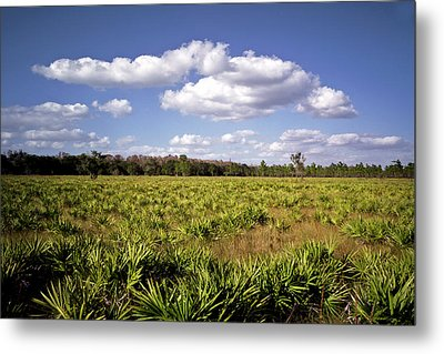 Palmetto Field. Three Lakes W.m.a. Metal Print by Chris  Kusik