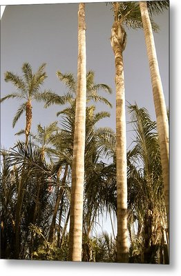 Palms Metal Print by Brynn Ditsche