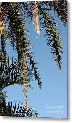 Palms In The Wind Metal Print by AR Annahita
