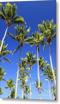Palms On Blue Sky Metal Print