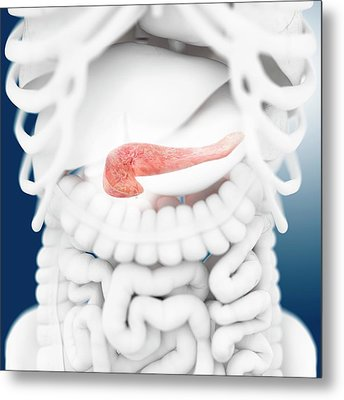 Pancreas Metal Print
