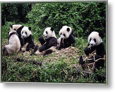 Pandas In China Metal Print by Joan Carroll