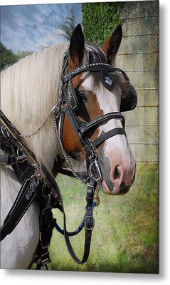 Pandora In Harness Metal Print by Fran J Scott