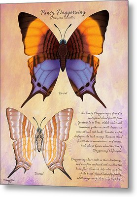Pansy Daggerwing Butterfly Metal Print by Tammy Yee