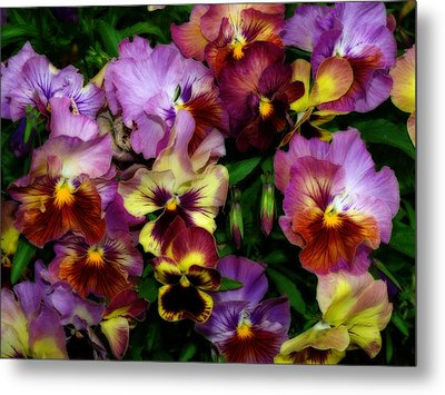 Pansy Mania Metal Print by Diane Schuster