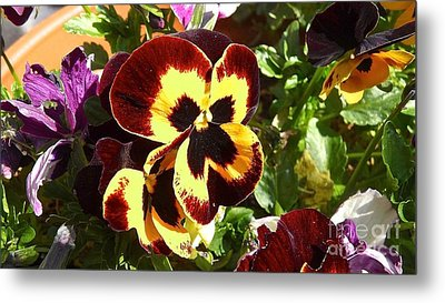 Pansy Time Metal Print by Julie Koretz