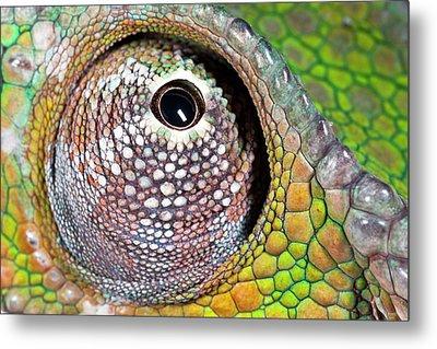 Panther Chameleon Eye Metal Print