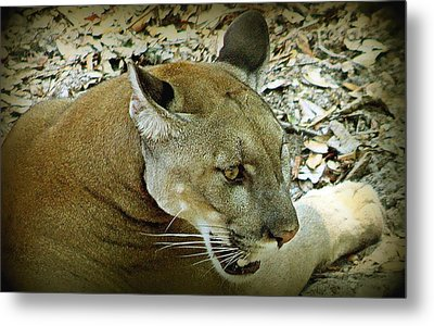 Panther Metal Print by Debra Forand