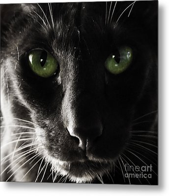 Panther Eyes Metal Print by Michael Canning