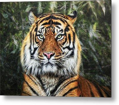 Panthera Tigris II Metal Print by Joachim G Pinkawa