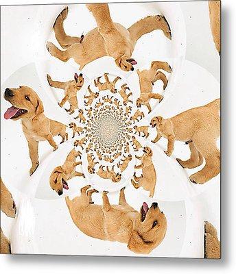 Panting Labrador Retriever Pup Metal Print by Nikki Keep