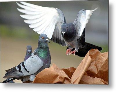 Paper Bag Pigeons 2 Metal Print