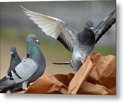 Paper Bag Pigeons 3 Metal Print