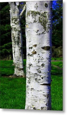 Black And White Metal Print featuring the photograph Paper Birch Trees by Aaron Berg