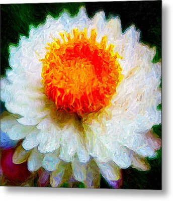 Metal Print featuring the digital art Paper Daisy by Chuck Mountain