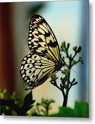 Paperkite Butterfly Metal Print