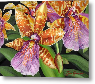 Paradise Orchid Metal Print