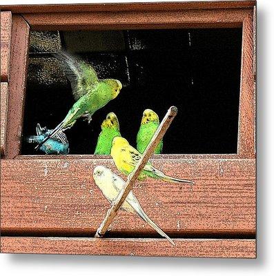 Parakeet Flutter Metal Print