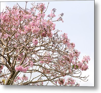 Parakeets Hiding In The Flowers Metal Print