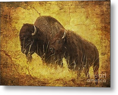 Parent And Child - American Bison Metal Print