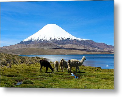Parinacota Volcano Lake Chungara Chile Metal Print by Kurt Van Wagner