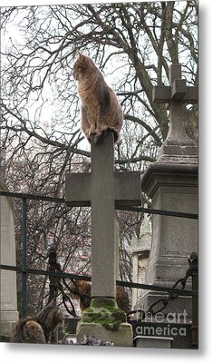Paris Cemetery Cats - Pere La Chaise Cemetery - Wild Cats On Cross Metal Print by Kathy Fornal