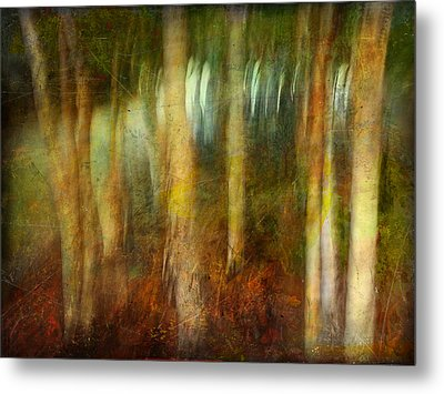 Metal Print featuring the photograph Park #8. Memory Of Trees by Alfredo Gonzalez