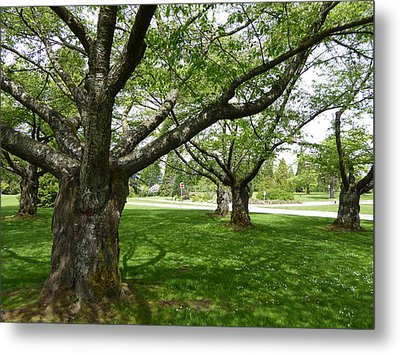 Metal Print featuring the photograph Park Trees by Laurie Tsemak