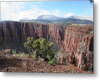 Metal Print featuring the photograph Parker Canyon In The Sierra Ancha Arizona by Tom Janca
