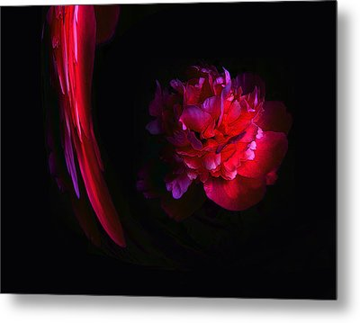 Parrot And Paeony Illusion Metal Print by Stephanie Grant