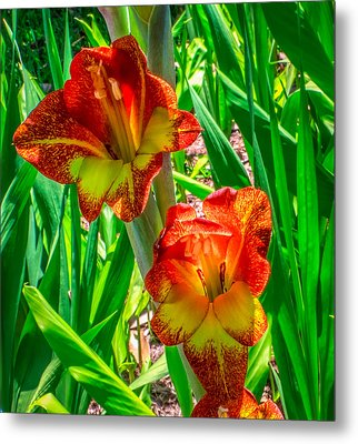 Metal Print featuring the photograph Parrot Gladiolus by Rob Sellers