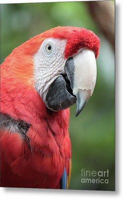 Parrot Profile Metal Print