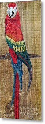 Parrot - Scarlet Macaw Metal Print by Eloise Schneider