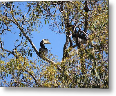 Hornbills With A Black Eye Metal Print by Four Hands Art