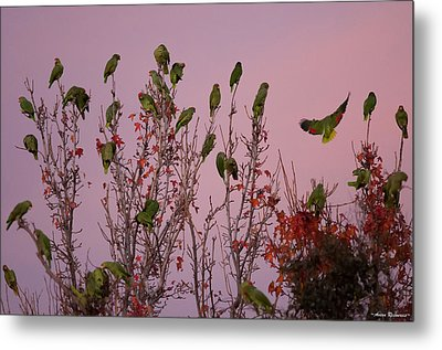 Metal Print featuring the photograph Parrots At Roost by Avian Resources