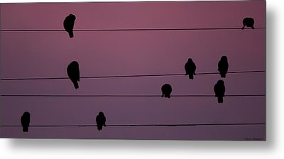 Metal Print featuring the photograph Parrots Online by Avian Resources