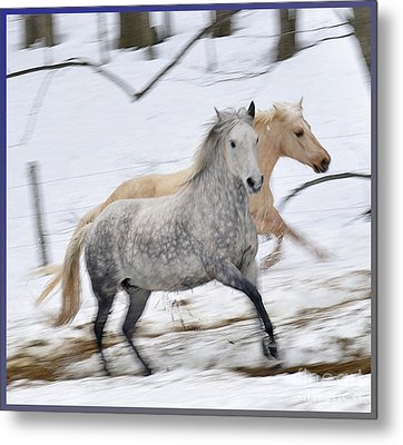 Paso Fino Mares Take Flight Metal Print by Patricia Keller