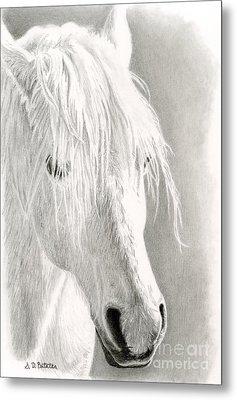 White Horse- Paso Fino Metal Print by Sarah Batalka