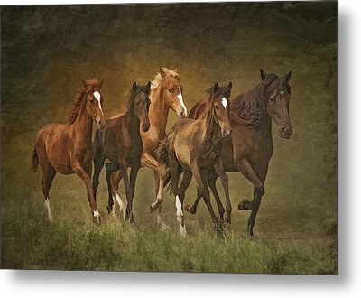 Metal Print featuring the photograph Paso Peruvians by Priscilla Burgers