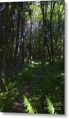 Passing Ferns  Metal Print by Tim Rice
